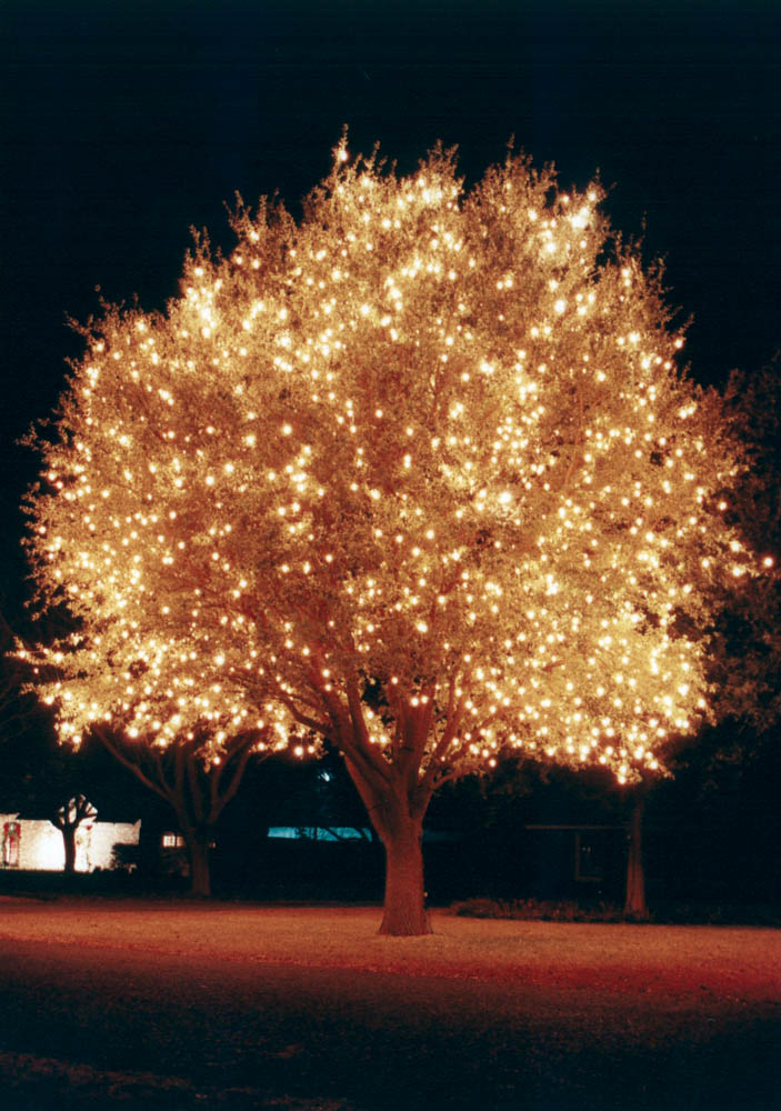 LED_Lit_tree.jpg