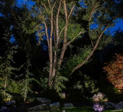 Tree-up-and-down-lighting-pond-Utah-3